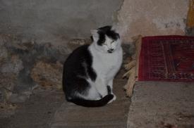 """Ez a macska éppen azt reméli, hogy """"többje lesz, mint ebbarátjának vacska"""""""